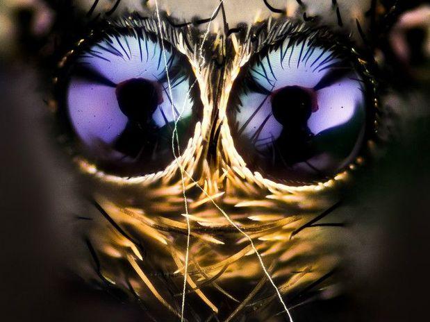 Olhar da aranha